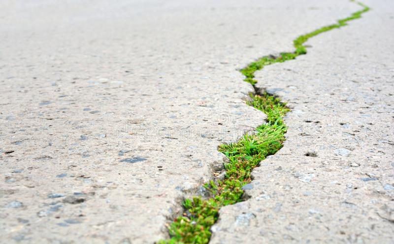 Новая концепция жизни Треснутая дорога шоссе и зеленый рост ростков через дорогу асфальта стоковые фото