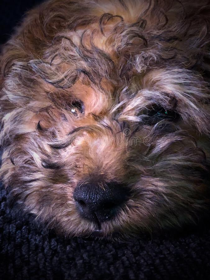 Новая любовь щенка стоковое изображение rf