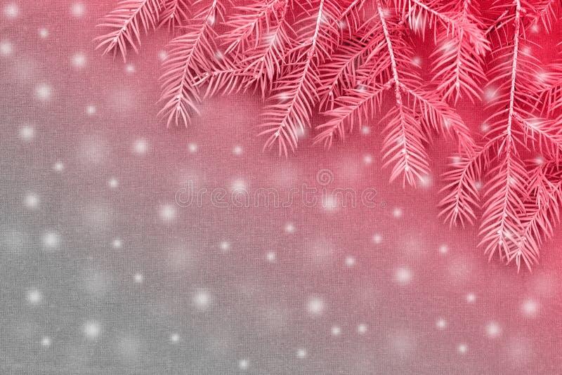 Новая предпосылка рождества с реальными ветвями сосны стоковое фото rf