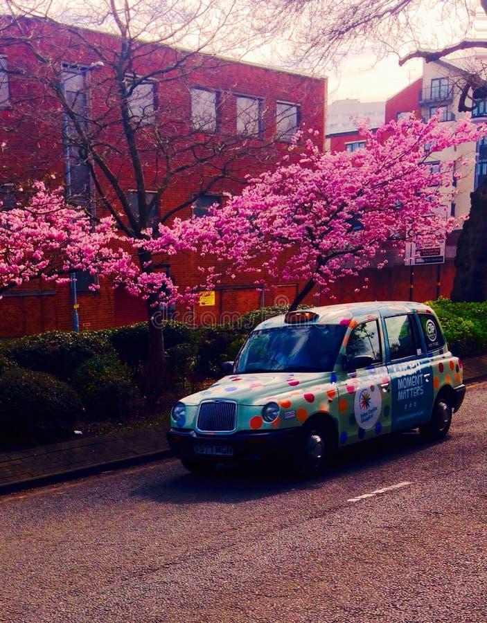 Новичок такси стоковые фото