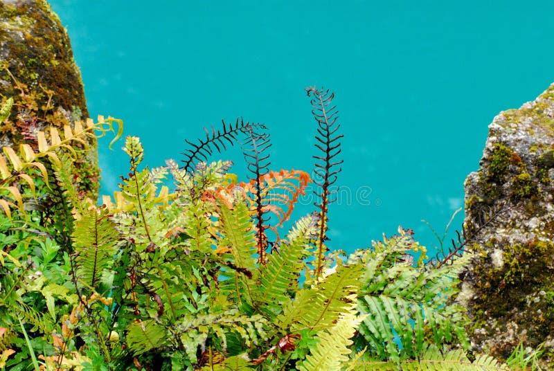 Новое ущелье Зеландии Hokitiki с папоротниками и скалистой скалой стоковые фотографии rf