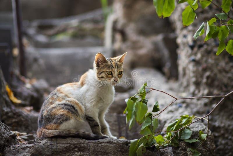 2018 новое фото, прелестный красочный рассеянный кот стоковая фотография rf