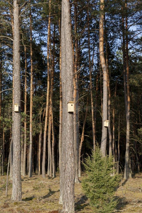 новые деревянные birdhouses стоковые изображения rf