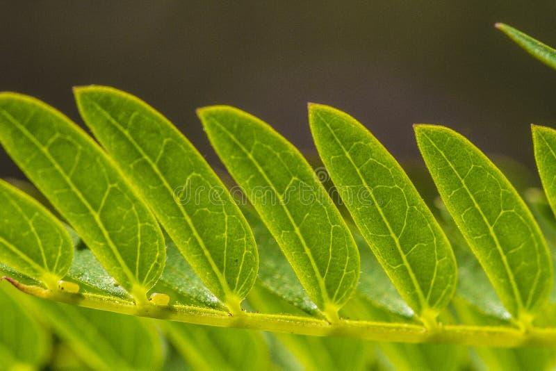 Новые листья стоковое изображение rf