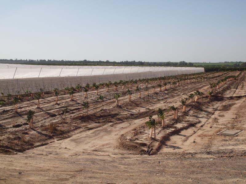 Новые плодоовощи Израиля Negev сада стоковое фото rf