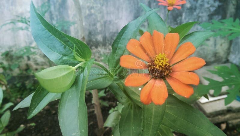 Новые цветки стоковое изображение rf