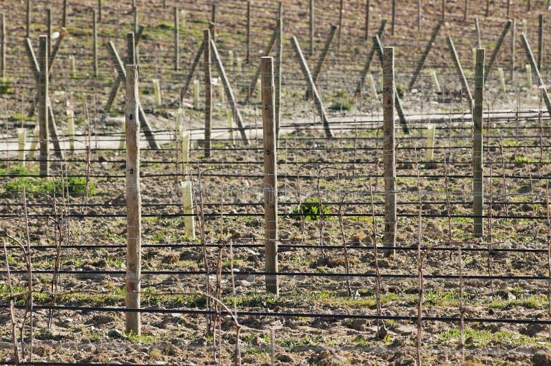 новый виноградник стоковое изображение rf