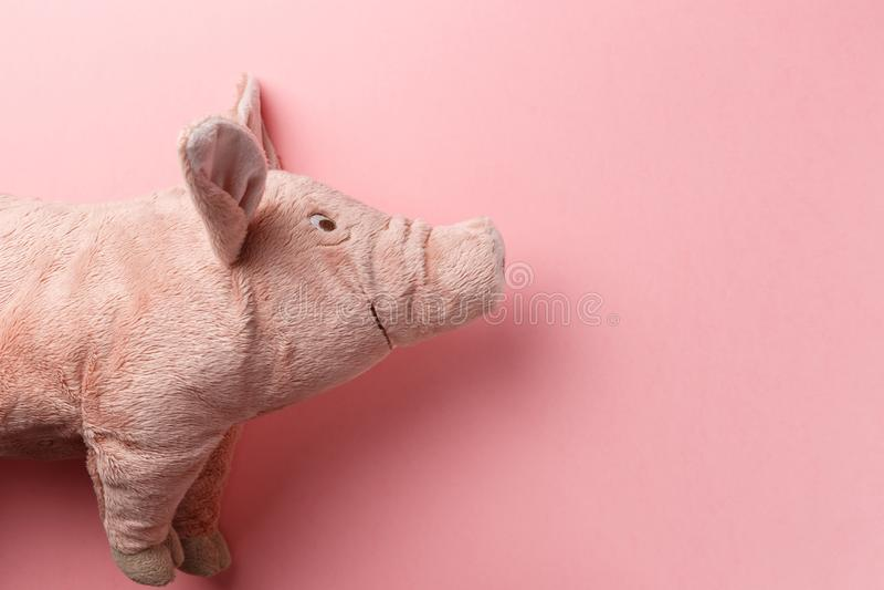 Новый Год свиньи на китайском календаре стоковое изображение