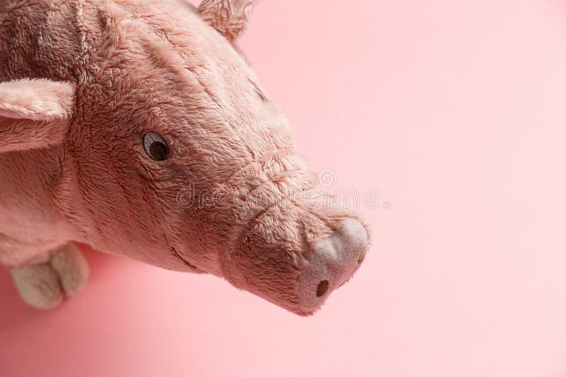 Новый Год свиньи на китайском календаре стоковая фотография