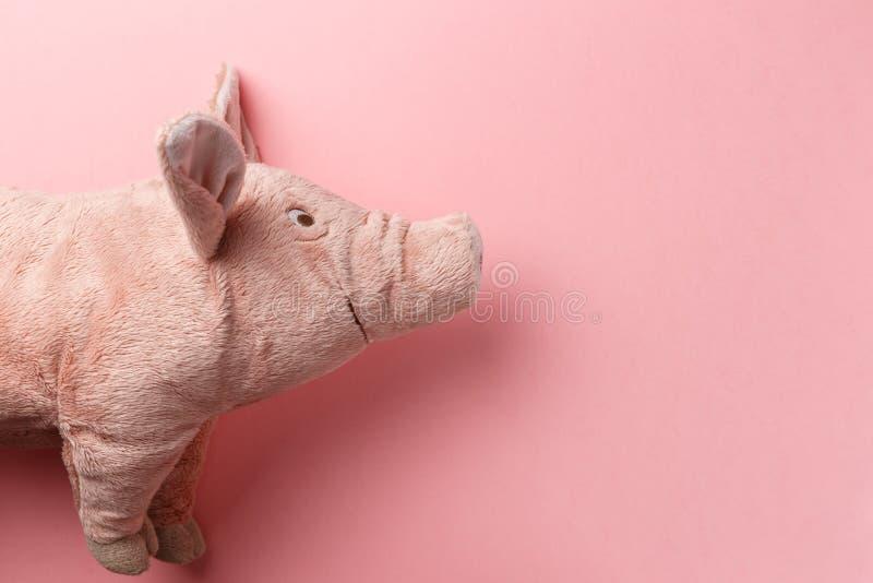Новый Год свиньи на китайском календаре Свинья Нового Года на розовой предпосылке E 2019 год желтой свиньи земли стоковые фотографии rf