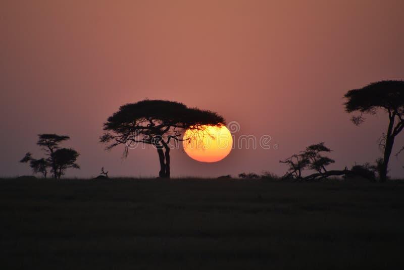 Новый день начинает на Serengeti, Танзании стоковое фото