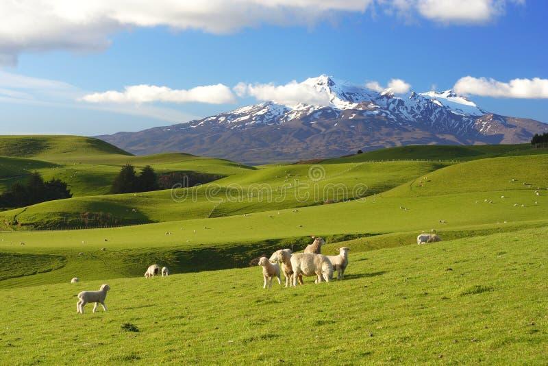 новый пейзаж zealand стоковая фотография rf