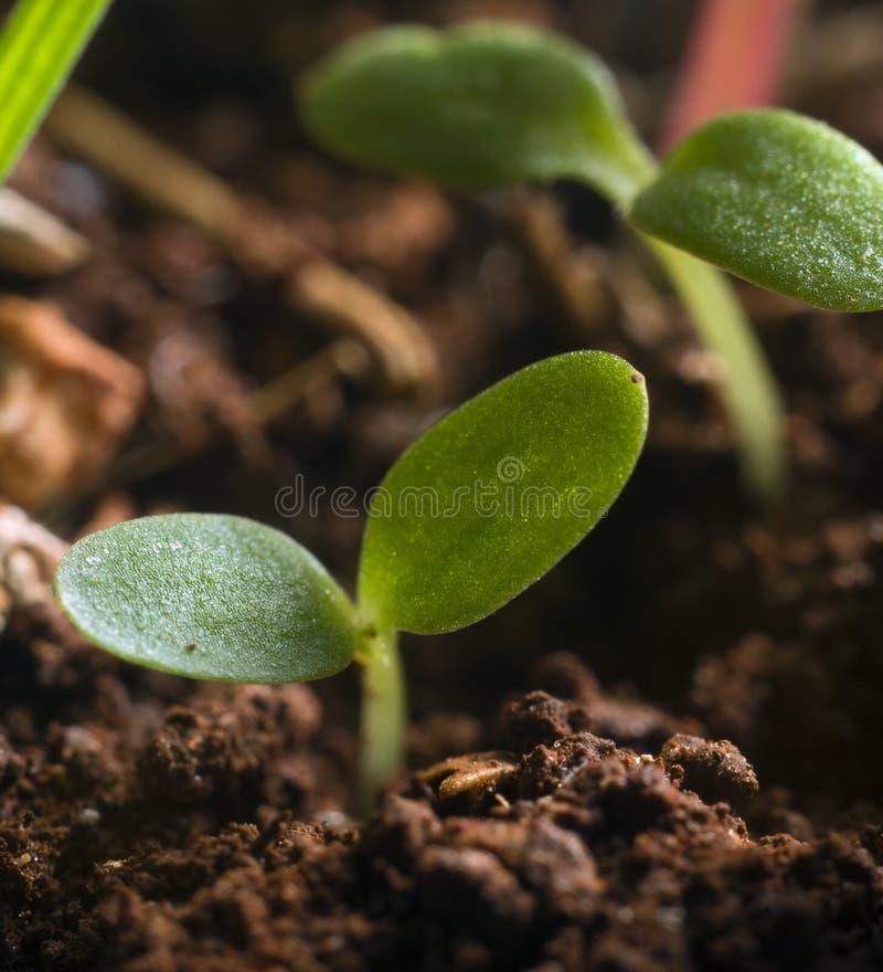 новый росток стоковое фото rf