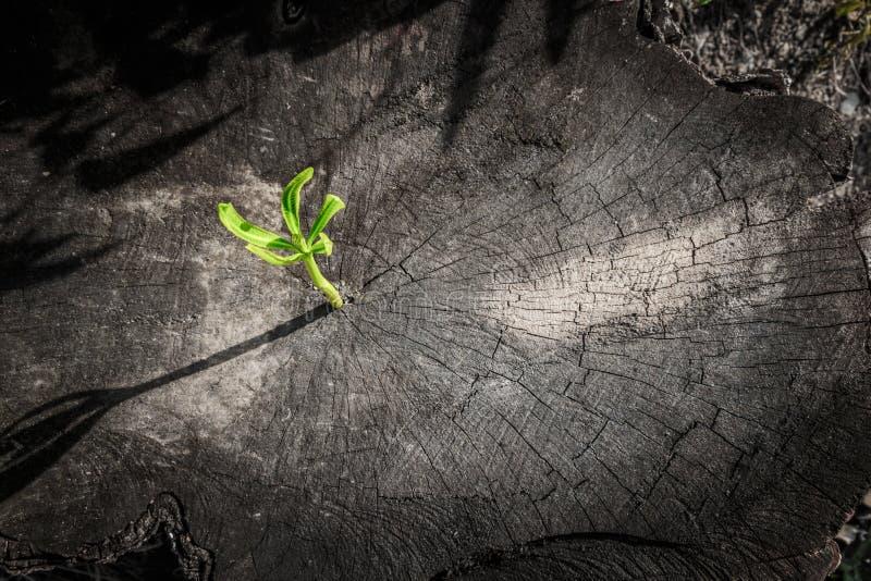 Новый рост дерева вверх на мертвом дереве как концепция дела стоковое фото
