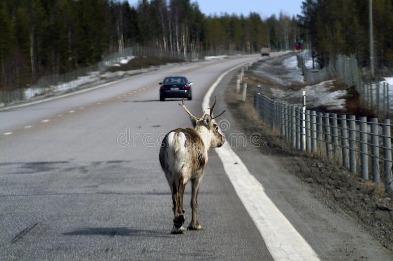 Новый участник дорожного движения стоковое изображение