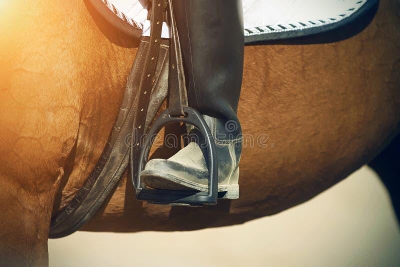 Нога всадника, который сидит на лошади залива, в черном ботинке отдыхает на стремени стоковая фотография rf