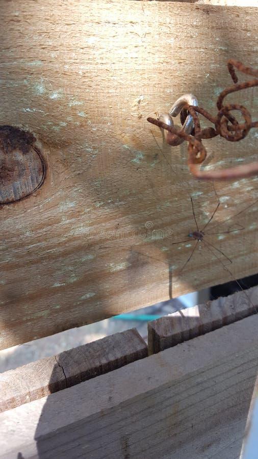 Нога папы длинная стоковое фото