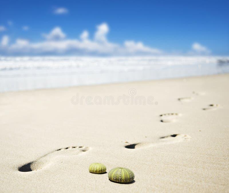 нога пляжа печатает песочное стоковая фотография