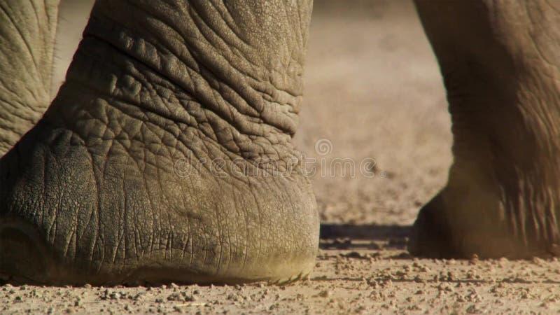 Нога слона с много текстурой и деталями стоковые фото