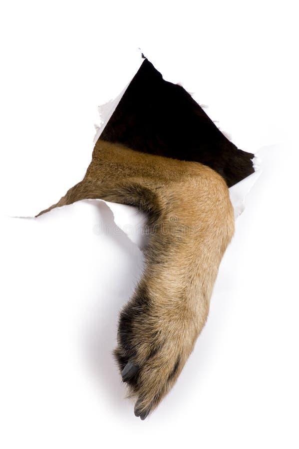 нога собаки стоковое фото