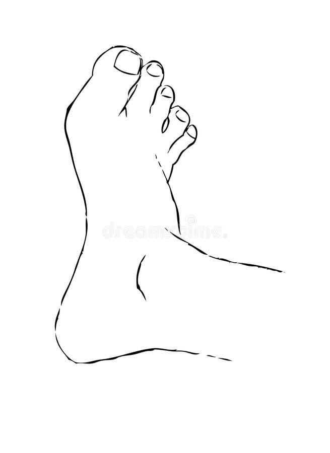 нога стоковые фото