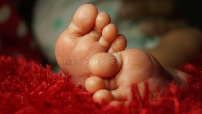 Ноги в красном ковре стоковое изображение