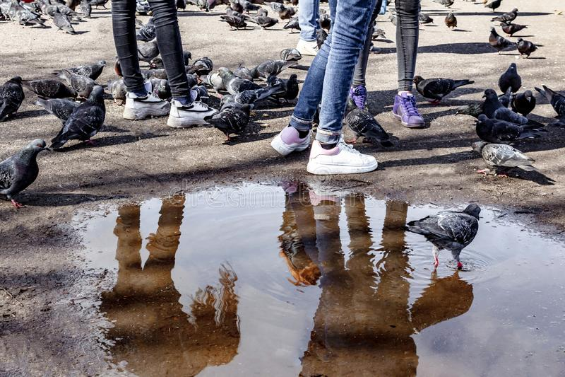 Ноги 3 девушек в плотных джинсах на предпосылке лужиц, асфальта и питаясь голубей в городской площади, современной моде, девушке стоковые фотографии rf