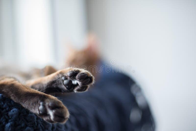 Ноги котенка с черными пусковыми площадками стоковые фото