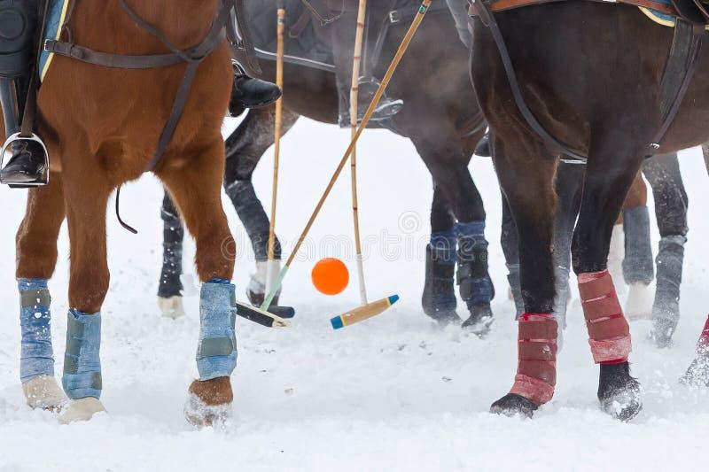 Ноги лошадей и копыта с ручками и шарик на поло лошади игры на снеге в зиме стоковое изображение rf