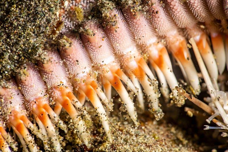 Ноги морских звёзд закрывают вверх стоковая фотография rf