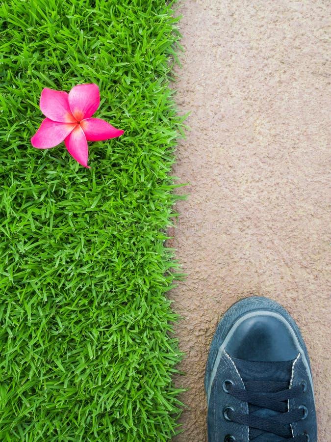 Ноги на поле между цветком на лужайке стоковые фото