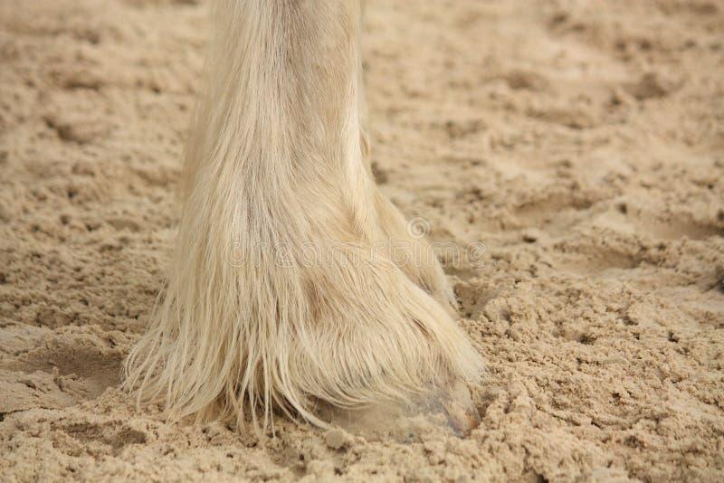 Ноги лошади графства закрывают вверх стоковая фотография rf