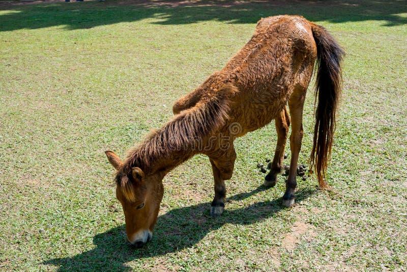 Ноги лошади tri стоковые фото