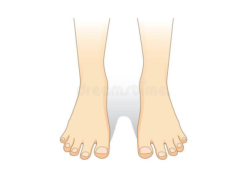 Ноги vector в вид спереди бесплатная иллюстрация