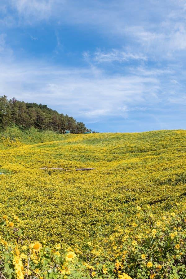 Ноготк дерева поля мексиканского солнцецвета стоковые фото