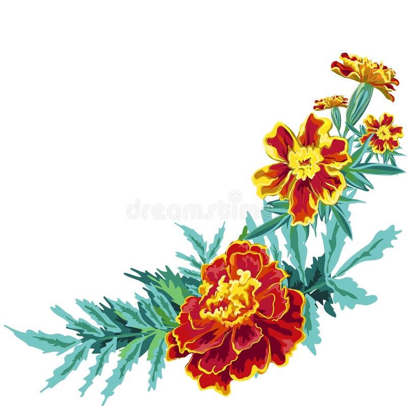 Ноготк цветка иллюстрация штока
