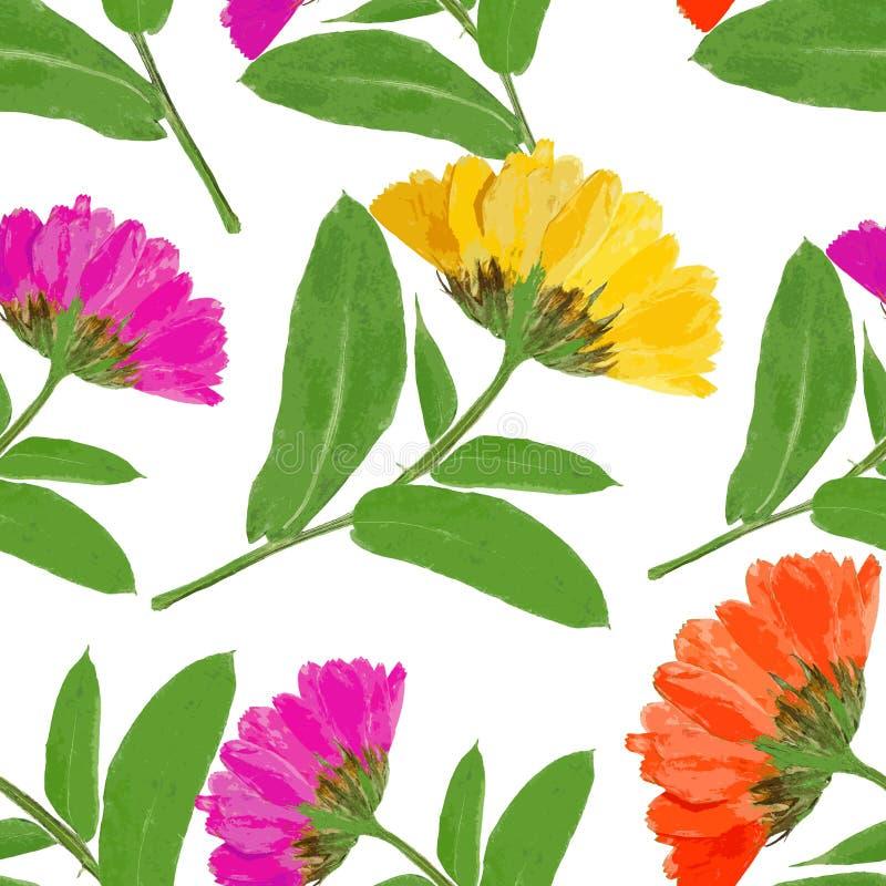 Ноготк, officinalis calendula Безшовная текстура картины pre иллюстрация штока