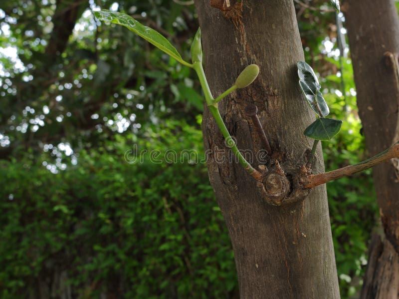 Ноготь врезанный в стволе дерева стоковые фото