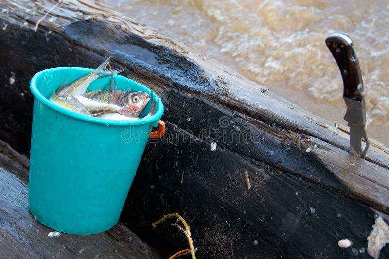 нож рыб ведра стоковая фотография rf