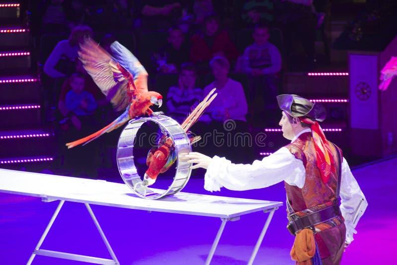 Номер цирка с птицами стоковая фотография