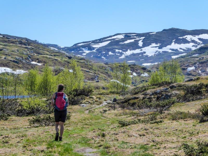 Норвегия - девушка с пешим рюкзаком на trhough следа плато гористой местности стоковое изображение