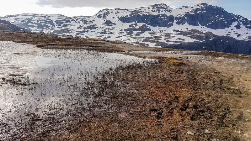 Норвегия - природа просыпает вверх после растительности зимы стоковые изображения rf