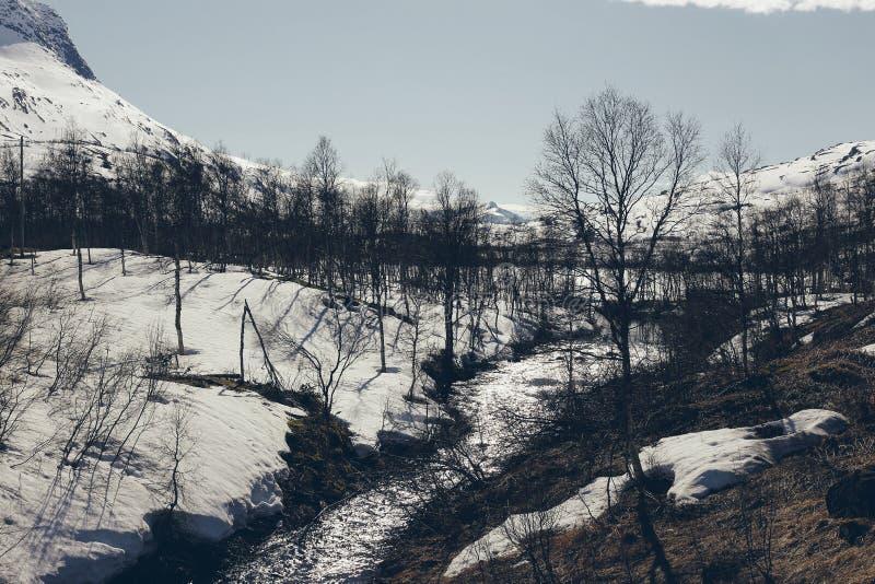 Норвежские ландшафты со снегом и деревьями стоковые фото