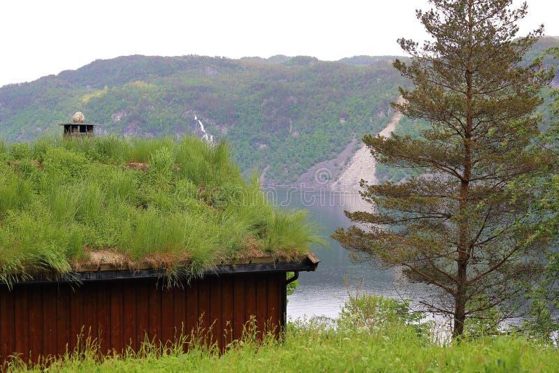Норвежские дома крыши травы стоковое фото rf