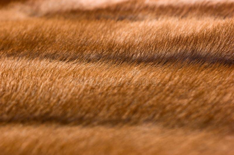 норка шерсти стоковое изображение