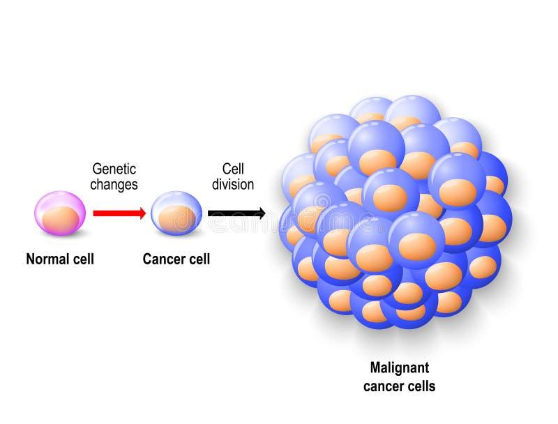 Нормальная клетка человека, раковая клетка и злокачественный рак иллюстрация штока
