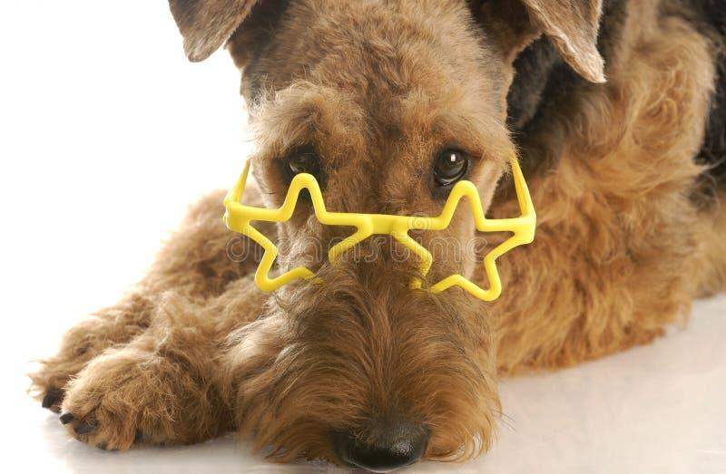 носить стекел собаки стоковое изображение