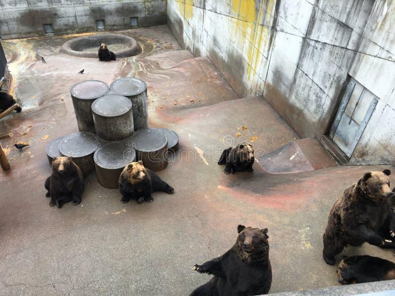 Носит коричневый цвет Японию зоопарка клетки приложения гризли стоковая фотография
