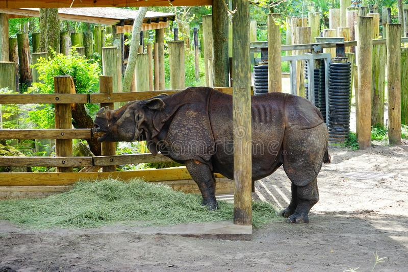Носорог ест стоковое фото
