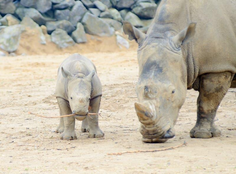 Мама я носорог картинка